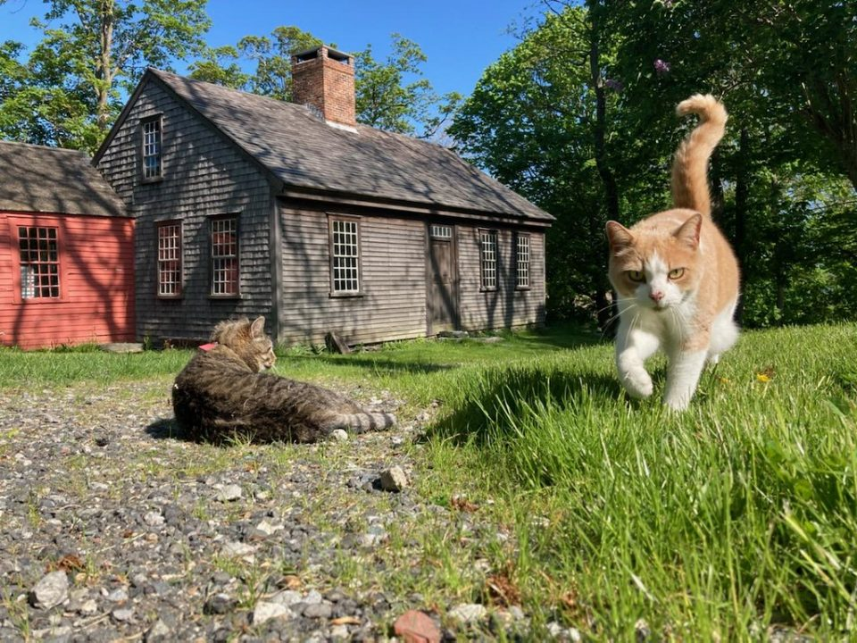 Cats and the Farmhouse
